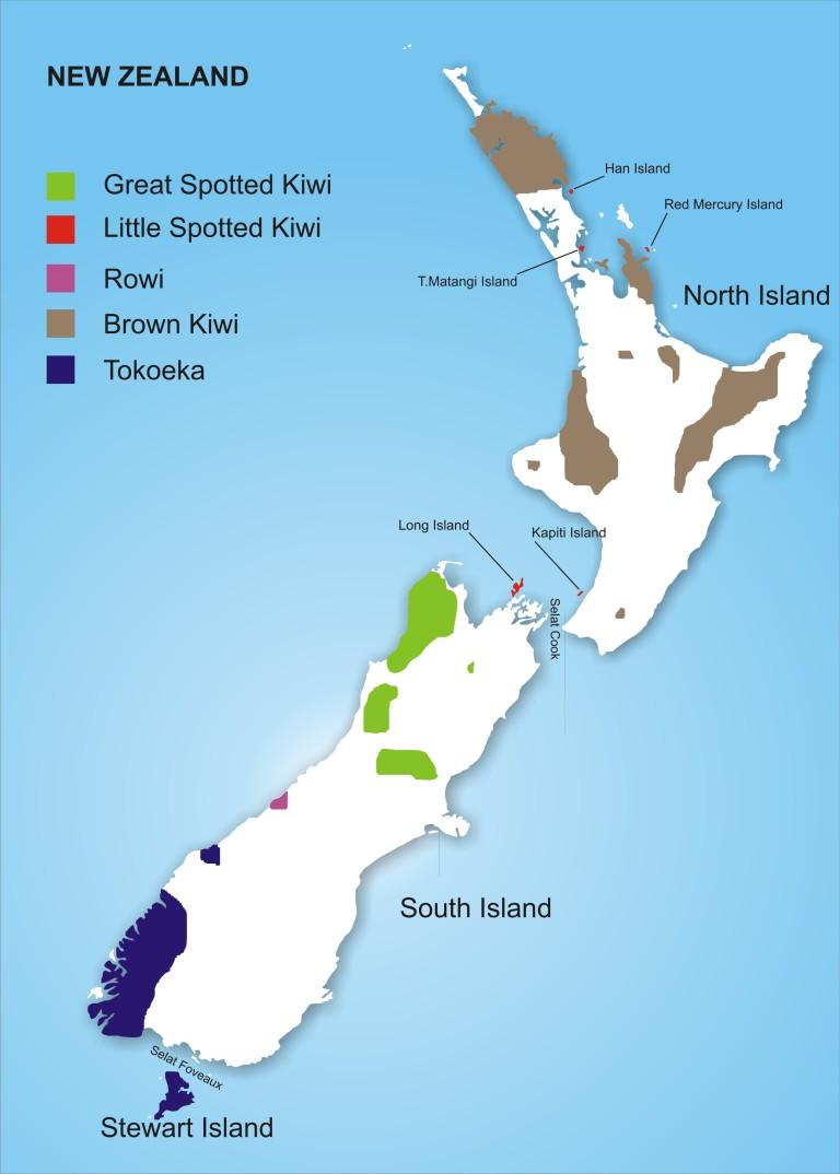 kiwi spread
